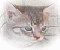 Clay Kitten Shooting II