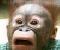 Opičí Puzzle